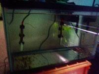 10 gallon quarantine tank