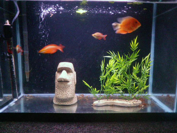Jaysee member spotlight for 20 gallon fish tank size