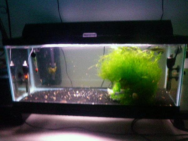 Jaysee member spotlight for 30 gallon long fish tank