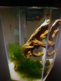 30 gallon hex aquarium