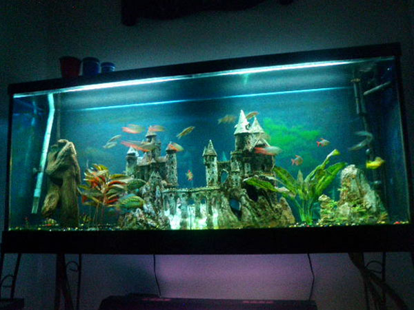 10 Steps To Make A Betta Fish Aquarium together with Turtank furthermore Aquascape South American Wild Aquarium 1 2 likewise Member Spotlight Jaysee additionally 30 Gallon Vertical Fish Tank 301 Moved Permanently. on oscar fish filtration