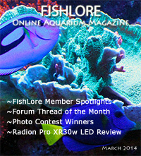 Aquarium Fish Magazine - March 2014