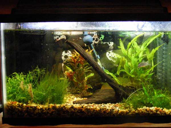 10 gallon fish tank 10 gallon fish tank ideas http www for Fish for a 10 gallon tank