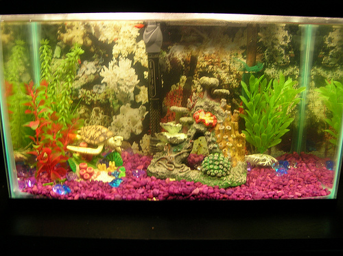 Member Spotlight - navyscuba 10 Gallon Fish Tank Ideas