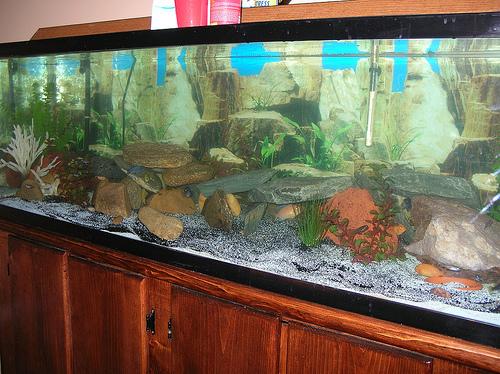 Member spotlight navyscuba for 100 gallon fish tank