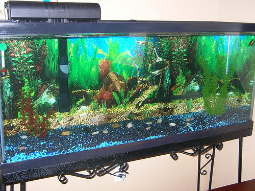 Member spotlight navyscuba for Coy fish tank
