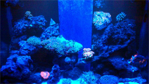 Reef Tank Night View