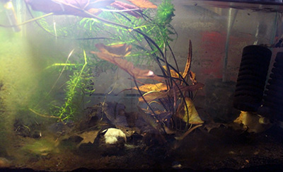 Aylad's Fish Tank 2