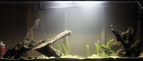 Aylad's Fish Tank