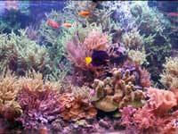 Example of a Saltwater Reef Tank