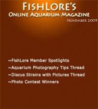 Aquarium Fish Magazine - November 2009