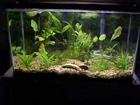 29 Gallon Planted Tank