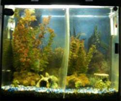 Chickadee's Aquarium