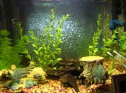 Chickadee's Fish Tank