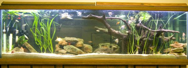 Member spotlight annadvn anna for 125 gallon fish tank