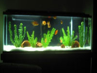 aquarium 3