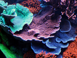 my reef tank close up
