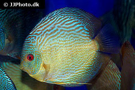 Freshwater Fish Profiles