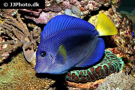 Saltwater Fish Profiles